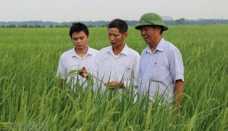 19 Sản Phẩm Nông Nghiệp Ở Bắc Ninh Được Bảo Hộ Sở Hữu Trí Tuệ