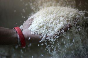 Bangladesh Mua Gạo Ấn Độ, Brazil Nhập Khẩu Sữa Tăng Cao
