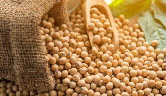 Bất ngờ Trung Quốc nhập số lượng lớn đậu tương của Mỹ