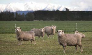 Công nghệ mới giúp ngành chăn nuôi hộ gia đình