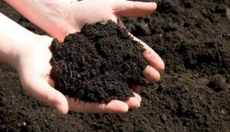 Hướng dẫn cách chọn và xử lý đất sạch trồng rau trên sân thượng