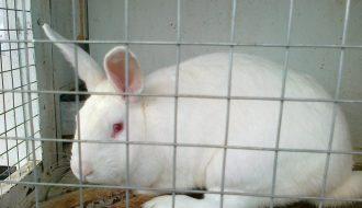 Hướng dẫn cách làm chuồng thỏ theo mục đích nuôi chi tiết nhất