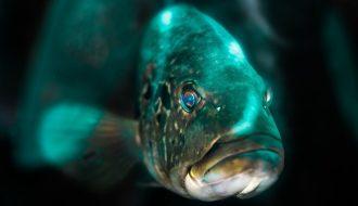 Ký sinh trùng gây bệnh trên cá: Nhận biết và cách chữa trị