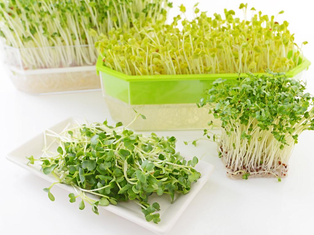 Mẹo nhỏ trồng rau mầm không cần đất cực dễ, ai cũng làm được