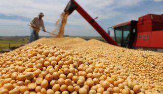 Nông Dân Brazil Bỏ Mía Sang Trồng Đậu Tương Bán Cho Trung Quốc