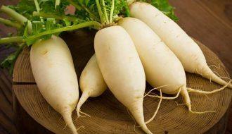 Quy trình kỹ thuật trồng và chăm sóc củ cải trắng sao cho hiệu quả nhất