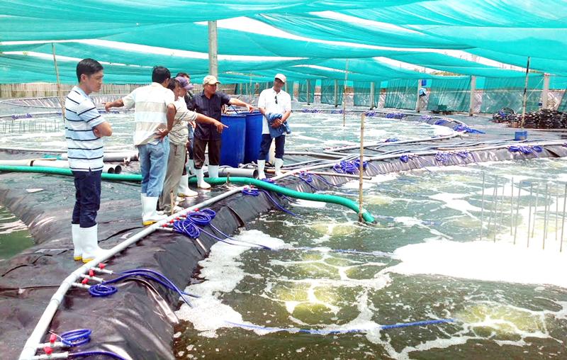 Tăng sức đề kháng, giảm bệnh tật cho thủy sản mùa nắng nóng