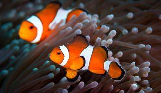 Top những loài cá nước mặn được nuôi phổ biến nhất hiện nay (P2)