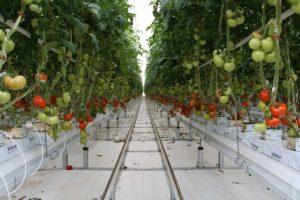 Thành công nhờ sử dụng công nghệ vào làm nông nghiệp