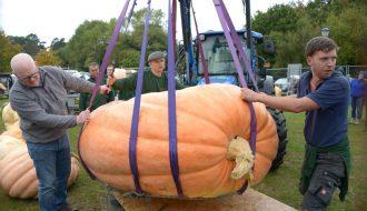 Thu hoạch Quả bí ngô hơn 1 tấn và giành chiến thắng cuộc thi ở California